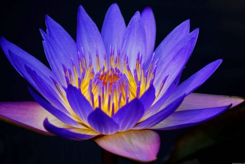 Blue Lotus Reiki Attunement